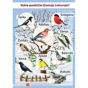 """Plakatas vaikams """"Kokie paukščiai žiemoja Lietuvoje"""""""